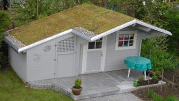 pflanzen auf dach