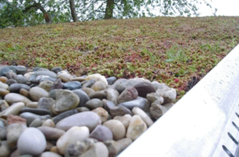 dachbegrünung bepflanzung